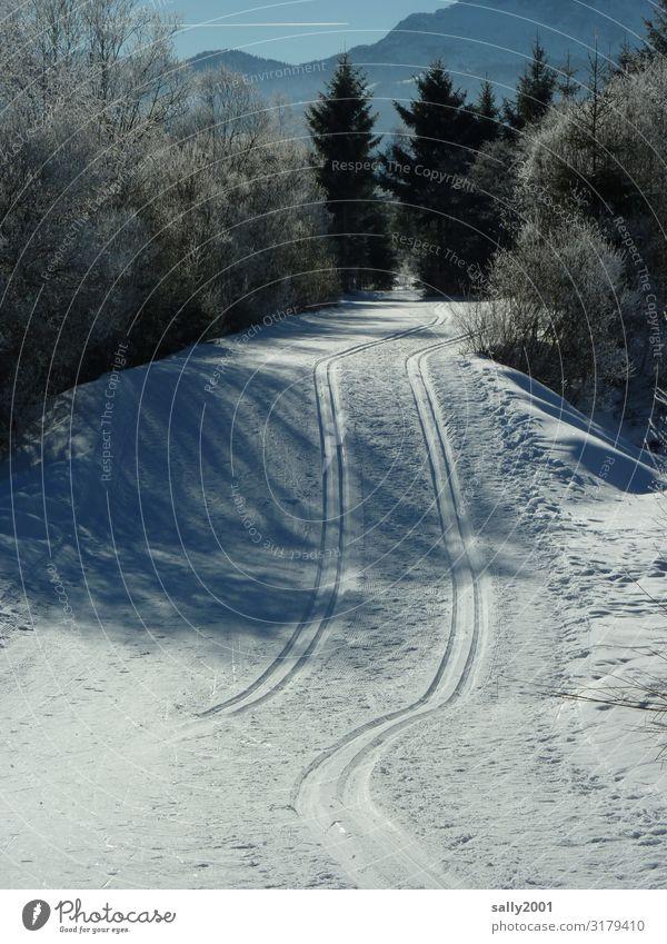 Langlaufvergnügen... Sport Skilanglauf Skifahren Loipe Landschaft Winter Schönes Wetter Eis Frost Schnee Wald Alpen Berge u. Gebirge frei weiß Zufriedenheit