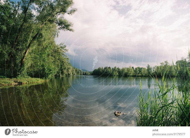 Alter Rhein Ferien & Urlaub & Reisen Tourismus Ausflug Freiheit Sommerurlaub Strand Umwelt Natur Landschaft Wasser Wolken Schönes Wetter Baum Sträucher Wald