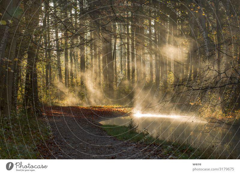 Fog rises on a sunny winter morning from a creek Natur Wald Winter Nebel nass Sauberkeit Bach