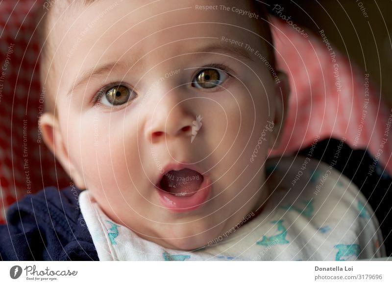 Porträt eines kleinen Jungen Lifestyle schön Kind Mensch maskulin Baby Kopf 1 0-12 Monate Glatze rebellisch Überraschung Babyjunge Kaukasier expressiv Auge