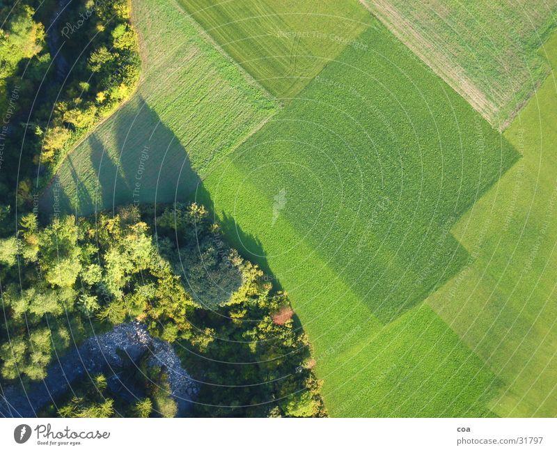 Felder Baum grün Linie Wellen