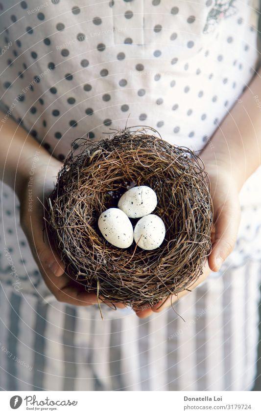 Hände eines kleinen Mädchens, das ein Nest mit Eiern hält. Lebensmittel Kind Mensch Jugendliche Hand 1 füttern Born Kinderzimmer Halt kleines Mädchen Angebot
