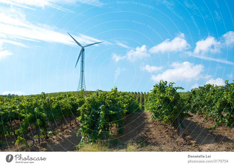 Windkraftanlage in den Weinbergen Sommer Sonne Landwirtschaft Forstwirtschaft Industrie Energiewirtschaft Technik & Technologie Fortschritt Zukunft
