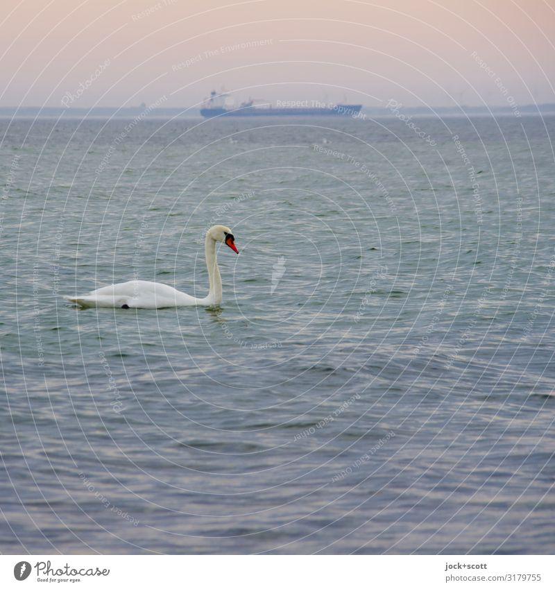 Schwan & Schiff (unscharf) Horizont Winter Vorpommersche Boddenlandschaft Rügen Verkehrswege Schifffahrt Containerschiff Wildtier 1 Ferne Romantik Gelassenheit