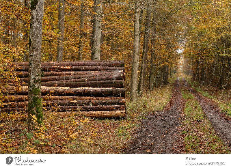 Waldweg im Herbst Baum Holz Industrie gesägt Abholzung gefallen Kiefer ökologisch braun Zerstörung Umwelt Brennholz Natur Baumstamm Baumrinde fällen Säge