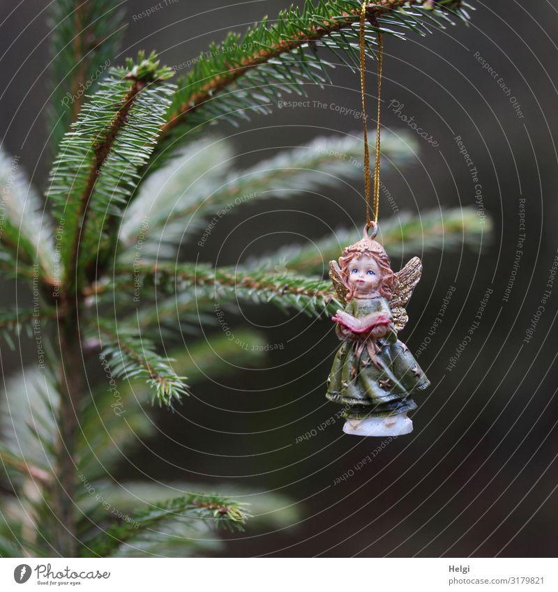 Engel aus Porzellan hängt an einem Tannenzweig Feste & Feiern Weihnachten & Advent Baum Dekoration & Verzierung Zeichen hängen ästhetisch schön einzigartig