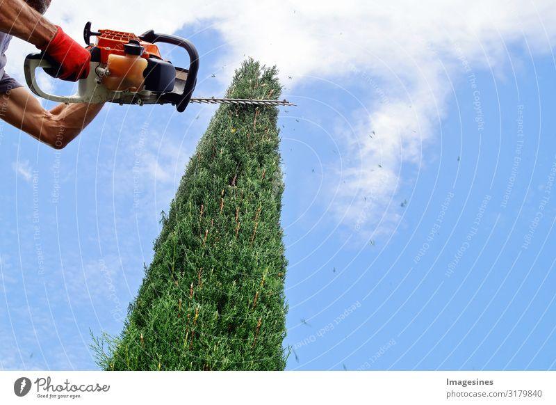 Heckenschnitt Arbeit & Erwerbstätigkeit Beruf Handwerker Gärtner Mensch 1 30-45 Jahre Erwachsene Natur Himmel Wolken Frühling Herbst Pflanze Baum Sträucher Tuja