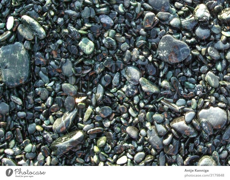 Steine_Kiesel_Farbenspiel Strand Umwelt nur Himmel ästhetisch glänzend einzigartig nass achtsam entdecken Natur Ordnung Umweltschutz Farbfoto Außenaufnahme