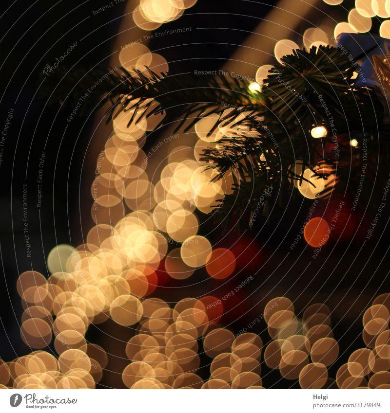 Tannenzweig mit leuchtendem Bokeh vor dunklem Hintergrund Feste & Feiern Weihnachten & Advent Winter glänzend außergewöhnlich dunkel gelb orange schwarz