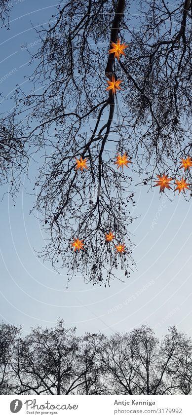 Winter_Sterne Feste & Feiern Weihnachten & Advent Veranstaltung Dekoration & Verzierung entdecken glänzend leuchten einzigartig schön Stimmung Überraschung