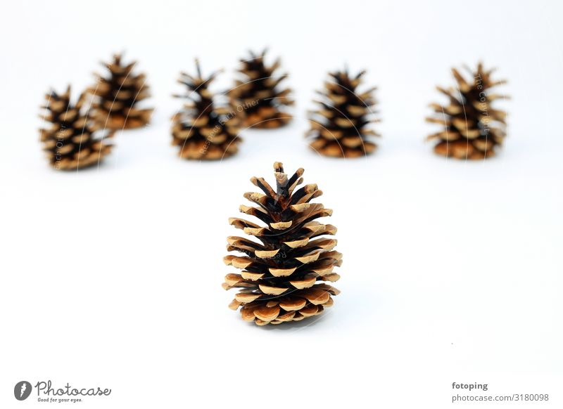 Tannenzapfen Dekoration & Verzierung Weihnachten & Advent Pflanze Baum braun weiß Samen Hintergrundbild weißer Hintergrund Tiefenschärfe Farbfoto