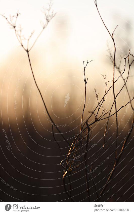 herbstliche Verknüpfungen Umwelt Natur Herbst Pflanze Gras Wildpflanze Wiese dunkel natürlich Stimmung Novemberstimmung Herbstgefühle Lichtstimmung bizarr