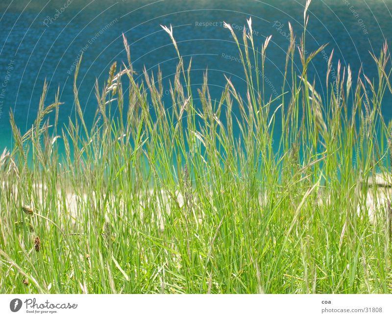 Gras Wasser grün blau Sommer Gras Küste frisch