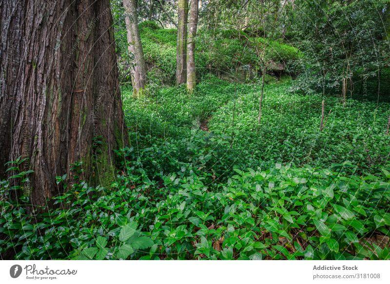 Fantastischer Wald in den galizischen mythologischen Bergen, Spanien Galicia Europa Park grün Ferien & Urlaub & Reisen Landschaft Umwelt Außenaufnahme nass