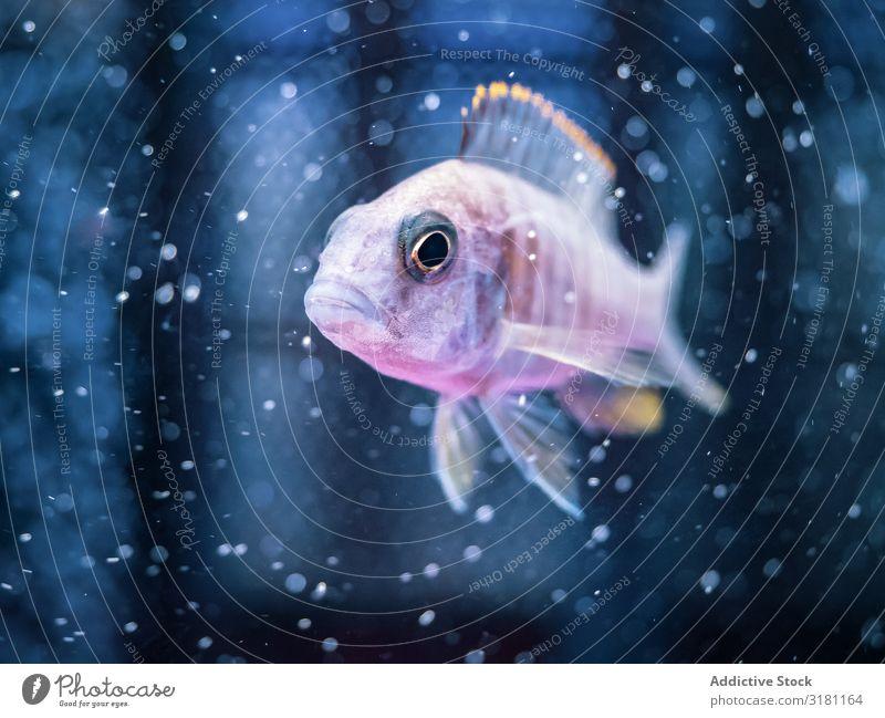 Exotische Fische im Aquarium Schwimmsport tropisch exotisch Wasser natürlich marin durchsichtig Tier aquatisch Sauberkeit Lebewesen erstaunlich schön prunkvoll