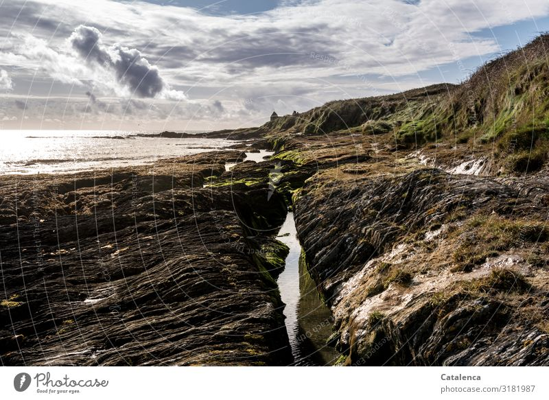 Felsen am Strand Freiheit Meer wandern Umwelt Natur Landschaft Erde Sand Wasser Himmel Wolken Horizont Winter Pflanze Gras Algen Meeresströmungen Wellen