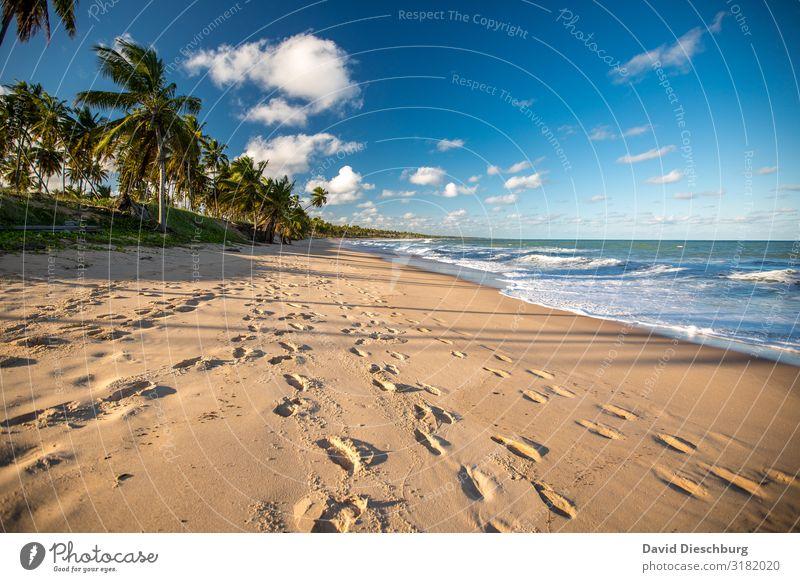 Strand in Bahia Ferien & Urlaub & Reisen Kreuzfahrt Sommerurlaub Sonnenbad Natur Landschaft Pflanze Tier Himmel Wolken Frühling Schönes Wetter Wellen Küste Meer