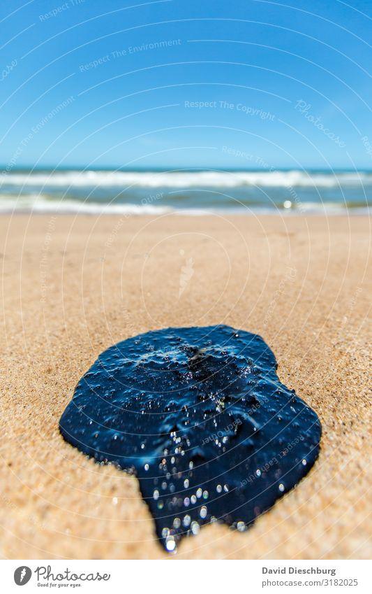 Öl im Paradies II Ferien & Urlaub & Reisen Umwelt Natur Landschaft Pflanze Tier Sand Wasser Wolkenloser Himmel Schönes Wetter Wellen Küste Strand Bucht Meer