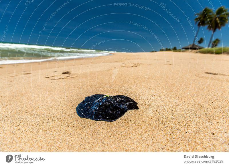 Öl im Paradies Ferien & Urlaub & Reisen Umwelt Natur Landschaft Schönes Wetter Küste Strand Meer Insel bedrohlich Klima Güterverkehr & Logistik