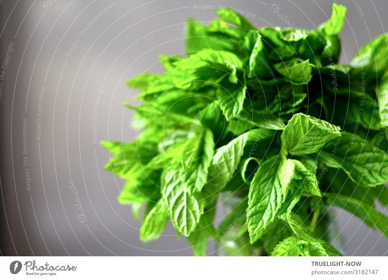 Pfefferminze: Frisches Grün auf Grau Lebensmittel Kräuter & Gewürze Minze Ernährung Bioprodukte Vegetarische Ernährung Slowfood Gesundheit Gesunde Ernährung