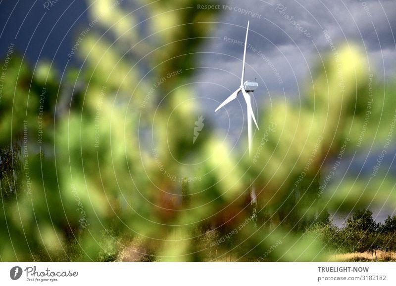 Windrad Natur Pflanze grün weiß Landschaft Baum Wolken gelb Umwelt grau modern Feld Luft elegant Energiewirtschaft Technik & Technologie