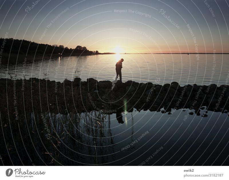 Strandläufer Junger Mann Jugendliche 1 Mensch Umwelt Natur Landschaft Luft Wasser Wolkenloser Himmel Horizont Sonne Herbst Schönes Wetter Küste Ostsee laufen