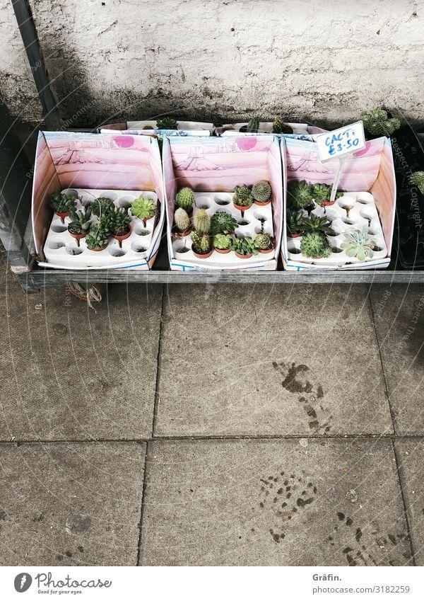 Plantfluencer Innenarchitektur Dekoration & Verzierung Pflanze Sommer Kaktus Grünpflanze Topfpflanze Mauer Wand Zeichen Schriftzeichen Schilder & Markierungen