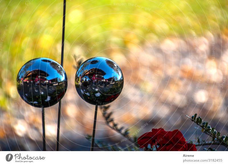 Glubsch Schönes Wetter Blume Garten Dekoration & Verzierung Glaskugel Zierpflanze Rosenkugel Gartenkugel Gartenkunst Kugel leuchten ästhetisch glänzend rund