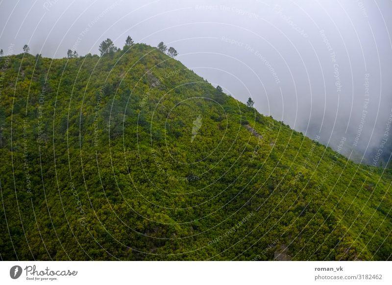 Nebelberg auf Madeira Umwelt Natur Landschaft Pflanze Urelemente Klima schlechtes Wetter Wind Grünpflanze Wald Urwald Hügel bedrohlich frisch trist grün