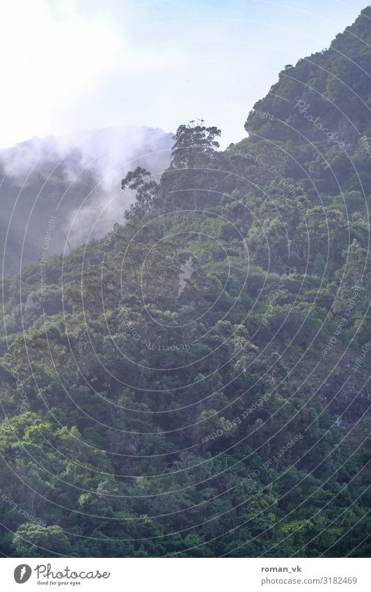 Madeiras Wälder Natur Pflanze Landschaft Baum Wald Berge u. Gebirge Umwelt Zufriedenheit frisch Nebel Wetter Schönes Wetter geschlossen Klima Neigung