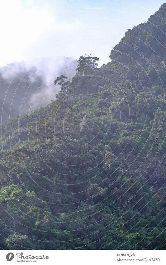 Madeiras Wälder Umwelt Natur Landschaft Pflanze Klima Klimawandel Wetter Schönes Wetter Nebel Baum Wald frisch gigantisch Unendlichkeit Zufriedenheit Djungel
