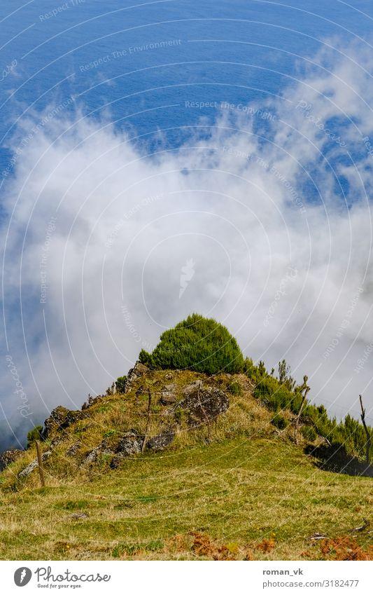 Der allwissende Busch Himmel Natur Pflanze grün Landschaft Wolken Tier Einsamkeit ruhig Wärme Umwelt Wiese frisch Wind verrückt Sträucher