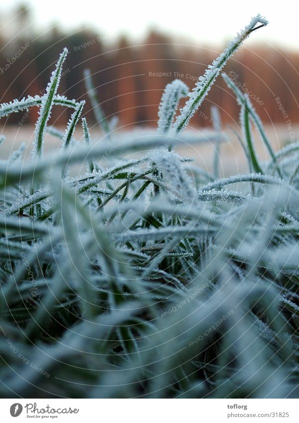 Morgenfrost Winter Herbst Gras Graffiti Frost Tau
