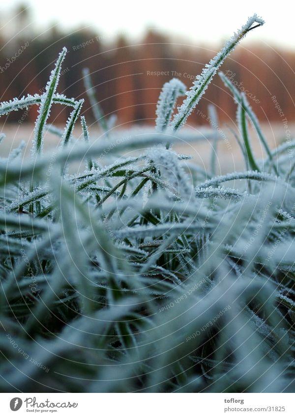 Morgenfrost Winter Herbst Gras Graffiti Frost Tau
