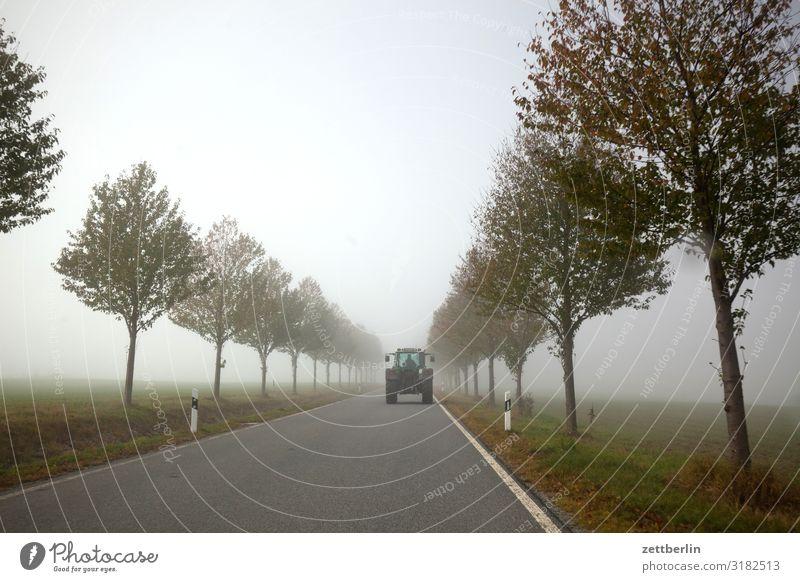 Landstraße mit Trecker Dunst gerade geradeaus Herbst Herbstfärbung Landschaft Menschenleer Morgen Nebel Perspektive Ferne Sonne Straße Textfreiraum Traktor