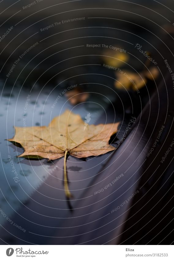 Herbst auf Auto Blatt Ahornblatt blau Windschutzscheibe herbstlich Herbstlaub Regen Wassertropfen Farbfoto Außenaufnahme Menschenleer Textfreiraum oben
