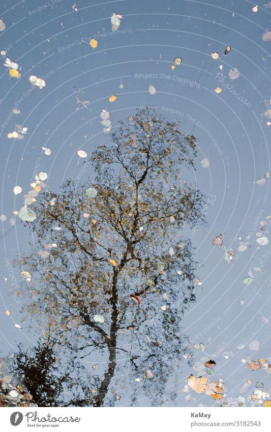 Spiegelung Wasser Herbst Baum Blatt See Deutschland Europa ästhetisch außergewöhnlich fantastisch natürlich einzigartig Natur Rätsel Surrealismus Birke