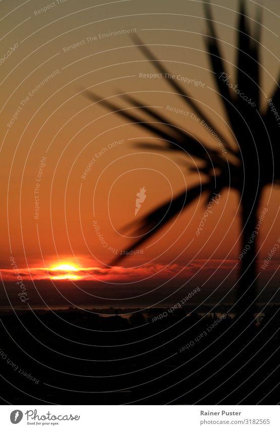 Sonnenuntergang in Lissabon Ferien & Urlaub & Reisen rot ruhig Ferne schwarz gelb Küste Zufriedenheit Horizont gold Sommerurlaub Städtereise Fernweh Sightseeing