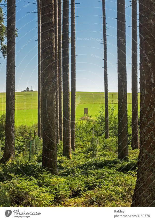 Schwarzwald Jagd Ferien & Urlaub & Reisen Tourismus Abenteuer wandern Umwelt Natur Landschaft Himmel Baum Wald Baumstamm Baden-Württemberg Deutschland Europa