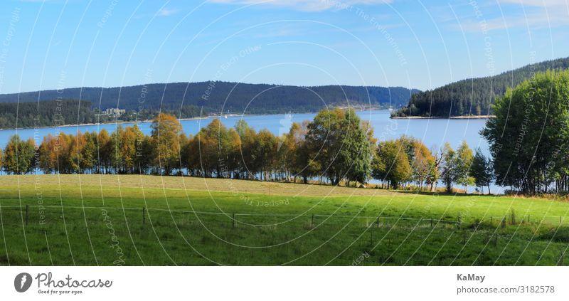 Schluchsee Umwelt Natur Landschaft Wasser Wiese Wald See Schwarzwald Deutschland Europa Horizont Idylle Ferien & Urlaub & Reisen Ferne Erholungsgebiet