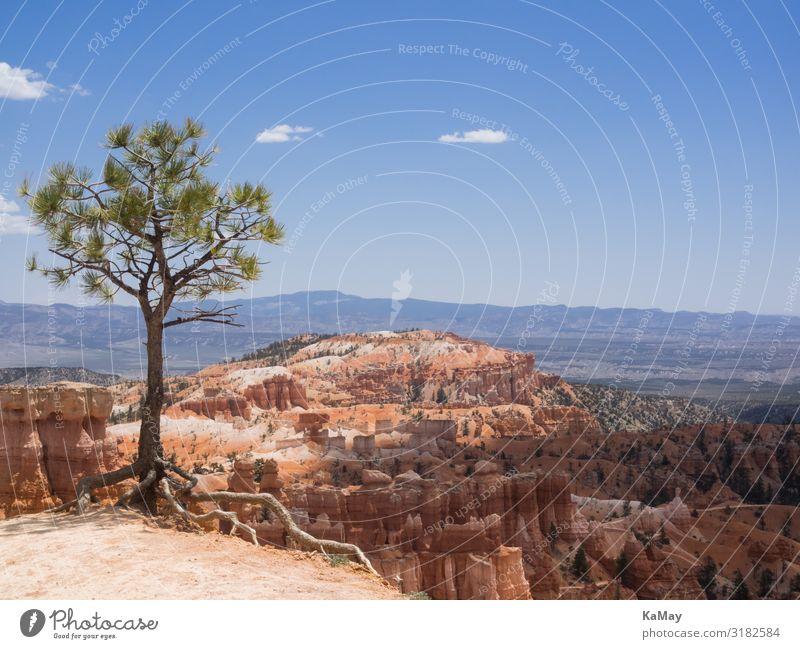 Bryce Canyon Ferien & Urlaub & Reisen Tourismus Abenteuer Ferne Freiheit Natur Landschaft Baum Schlucht Bryce Canyon National Park Utah Amerika USA Umwelt