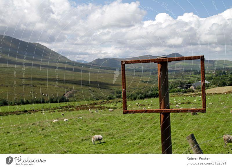 Grüne Weiten: Unterwegs durch Irland Ferien & Urlaub & Reisen blau grün ruhig Ferne Umwelt Wege & Pfade Wiese Gras wandern Wachstum Tiergruppe Hügel