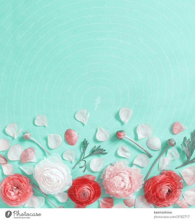 Blumen auf hellgrünem Hintergrund Design Dekoration & Verzierung Hochzeit Frau Erwachsene Mutter Rose oben Kreativität romantisch zartes Grün Minze