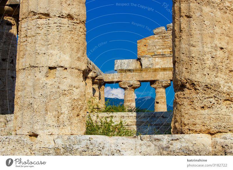 Der griechische Athenatempel. Paestum, Italien Ferien & Urlaub & Reisen Tourismus Kunst Kultur Park Ruine Architektur Stein alt Religion & Glaube Athene