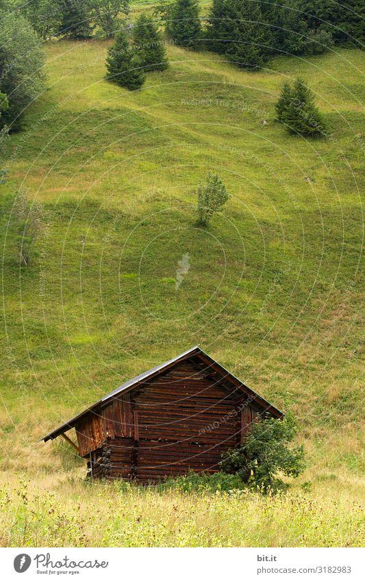 Hanglage Umwelt Natur Landschaft Pflanze Baum Grünpflanze Wiese Wald Hügel Berge u. Gebirge grün Berner Oberland Hütte Hüttenferien Schuppen Haus Holzhütte