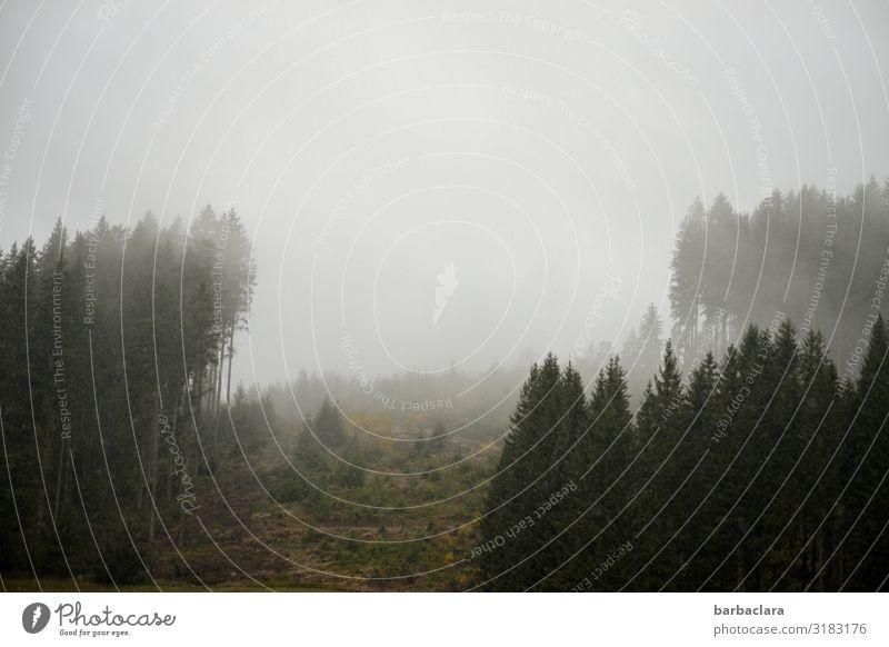 !Trash 2019! | kalter, trüber Morgen Landschaft Urelemente Himmel Nebel Eis Frost Wald Schwarzwald Stimmung Beginn Horizont Klima Natur Ferne Farbfoto