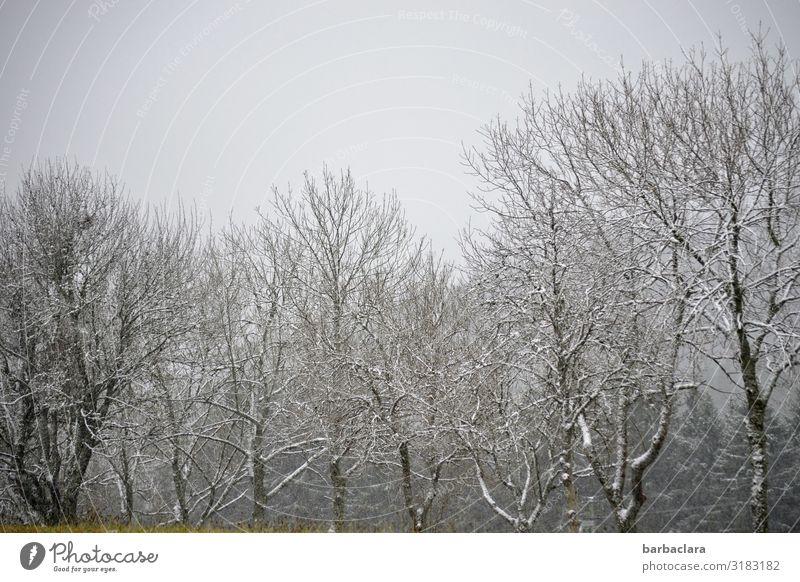 kalter Novembermorgen Natur Landschaft Urelemente Himmel Herbst Winter Eis Frost Schnee Baum Sträucher Wald grau weiß Stimmung Beginn Erwartung Klima ruhig