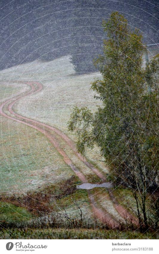 erster Schnee im Schwarzwald Natur Landschaft Urelemente Erde Luft Wasser Herbst Winter Klima Baum Gras Feld Wald Bach Wege & Pfade Fußweg kalt nass Stimmung