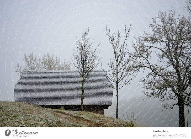 kalter Novembertag im Schwarzwald Natur weiß Landschaft Baum Haus Wald Winter Herbst Umwelt Schnee grau Stimmung Häusliches Leben Schneefall Eis