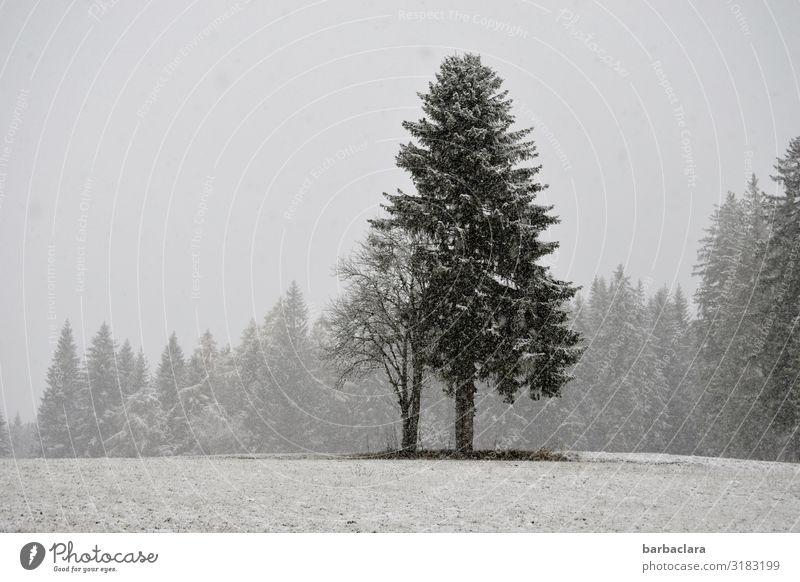 Schnee von gestern Landschaft Urelemente Winter Nebel Schneefall Baum Wiese Wald stehen kalt grau schwarz weiß Stimmung Klima Natur Umwelt Gedeckte Farben